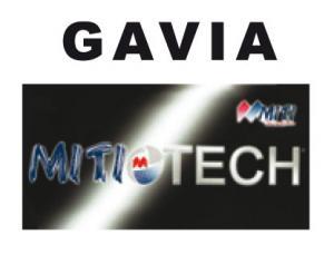 Gavia